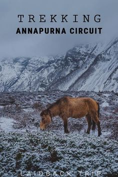 Trekking Annapurna Circuit | One of the world's best known multiday hikes | Be inspired by our detailed Guide | #AnnapurnaCircuit #Trekking #Nepal #adventure #mountains #horse