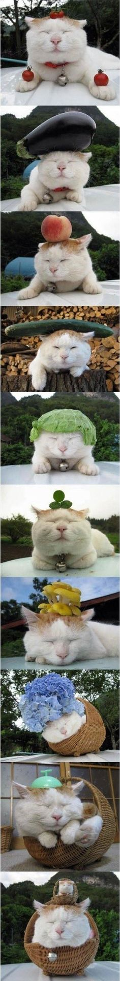 AHAHAHA! VEGETABLES ON DUH KITTEH!!! HAHAHA!!!