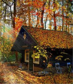 House in the woods ....Now this is a cottage,you don't go there to live like at home, you go there to not live like at home.