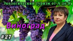 Экологический туризм от А до Я № 27 Польза винограда