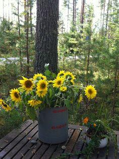 Luonnossa Planting Flowers, Garden, Plants, Garten, Lawn And Garden, Gardens, Plant, Gardening, Outdoor