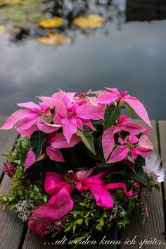 Plants, Christmas Stars, Plant, Planets
