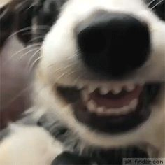 Found the front camera