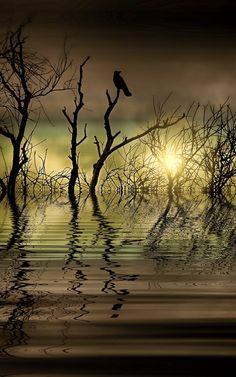 Twilight reflected - ©Shalisa Photography (via Society6)