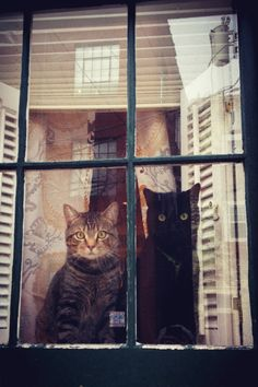 South Philly window cats via hellowindowcat.tumblr.com