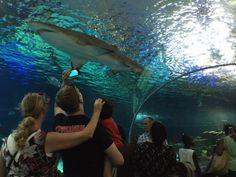 Ripleys Aquarium em Toronto