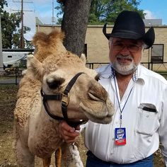 They brought out the camels for the Arkansas State Fair media sneak peak.  #ARStateFair #FairHungry #fairfood #arkansasfood #arkansasstatefair