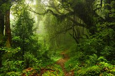 Humid tropic path / 3606 x 2400 / Forest / Photography | MIRIADNA.COM