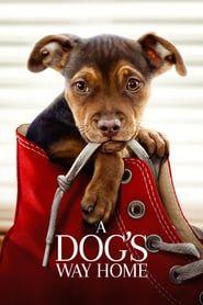 Watch A Dog's Way Home Movie Online Streamig   Watch Movies Online Streaming #ADogsWay