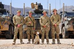 Australian engineer personnel at Patrol Base Sorkh Bed in northern Kandahar province are working closely with the Afghan National Army to improve their skills in the field, through specialist courses and mentored operations. The teams include specialist Explosive Ordnance Disposal technicians and Explosive Detection Dog handlers. Pictured here are a few of our Sappers and their dog taking a break for a photo in Afghanistan. Cheers, Andy AA Admin