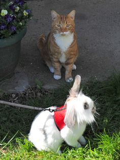 A cat and a... rabbit?