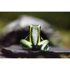 【tact_k】さんのInstagramをピンしています。 《俺の背中  camera:α7Ⅱ lens:SEL90M28G  #サンシャイン水族館 #水族館 #アクアリウム #aquarium #マクロレンズ #macrolens #マクロ #macro #東京カメラ部 #tokyocameraclub #photooftheday #写真好きな人と繋がりたい #写真撮ってる人と繋がりたい #ファインダー越しの私の世界 #instagramjapan #IGersJP #ig_japan #sonya7lovers #Sonyalpha #sonya7ii #sonya7 #α7ii #SonyAlphasClub》