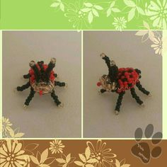 Katicabogár / ladybird