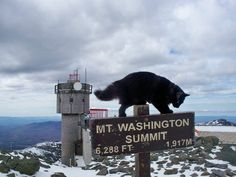 Extend your National Trails Day celebration into the summer and join the intrepid hikers at Mount Washington Observatory's Seek the Peak on July 20. You are sure to enjoy an immensely rewarding physical challenge and might also catch some great views and a glimpse of Marty, the observatory's feline mascot. Find more info on the event here: http://www.americanhiking.org/events/seek-the-peak/