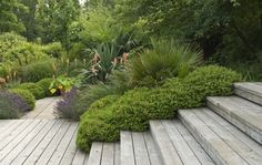 Contrasts with strict wood and lush bushes- Contemporary garden design