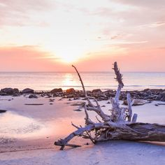 9 Underrated Places To Visit On An American East Coast Road Trip East Coast Beaches, East Coast Usa, East Coast Road Trip, Us Road Trip, Cascade National Park, North Cascades National Park, Driftwood Beach Jekyll Island, Honey Moon, Best Island Vacation