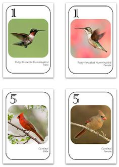 Free Birdwatching Game - or make your own!