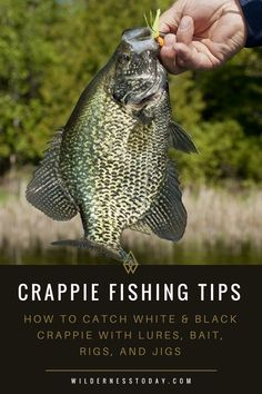 Need some crappie fishing This monster guide will provide you the crappie fishing tips you need to make sure you reel in a ton of crappie on your next fishing trip. We look at Lures Rigs Bait Gear and what seasons are best. Need some crappie fi Crappie Fishing Tips, Bass Fishing Lures, Bass Fishing Tips, Gone Fishing, Fishing Stuff, Fishing Knots, Crappie Rigs, Kayak Fishing, Catfish Fishing