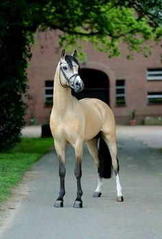 Amazing horse cosplay. You almost cant tell. Lol