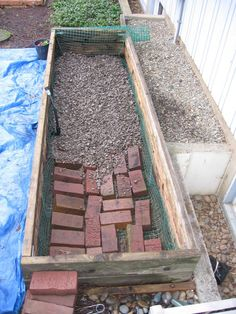 Tortoise pen. Bricks to prevent escape. Would probably be better with paving stones or plywood...