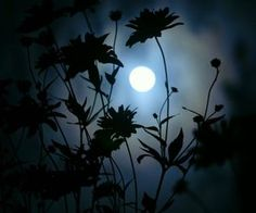 Here are some amazing Full Moon Photography Tips and Ideas that will come handy if you are keen on taking creative moon pictures. Moon Moon, Moon Art, Full Moon, Moon Pictures, Nature Pictures, Pretty Pictures, Moon Pics, Moonlight Photography, Moon Photography