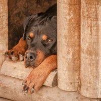 #dogalize Cuccia cane fai da te: ecco una guida per realizzarla #dogs #cats #pets