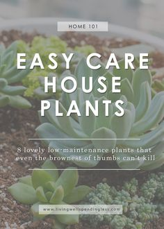 Easy Care House Plants - - Love houseplants but terrible at taking care of them? Meet 8 easy care house plants that are nearly impossible to kill. (Some even LIKE being ignored! Indoor Gardening Supplies, Gardening Tips, Urban Gardening, Organic Gardening, Hydroponic Gardening, Container Gardening, Hanging Plants, Indoor Plants, Indoor Flowers