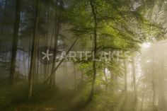 Canvas On Demand Morning Beauty by Norbert Maier Photographic Print on Canvas Size: 2 Foggy Forest, Forest Path, Artist Canvas, Canvas Art, Canvas Prints, Canvas Size, Hd Samsung, Forest Landscape, Weird World