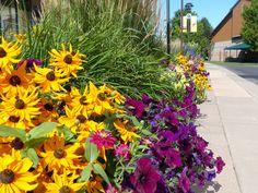 Aspen Grove, finalist Best Use of Color