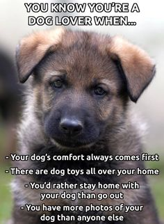 Wicked Training Your German Shepherd Dog Ideas. Mind Blowing Training Your German Shepherd Dog Ideas. I Love Dogs, Puppy Love, Big Dogs, Cute Puppies, Dogs And Puppies, Doggies, Cat Anime, Jiff Pom, Game Mode