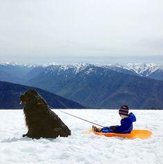 Credit: Stasha Becker/Rex Features Julian Becker and Max the dog - NEWFIE!!!