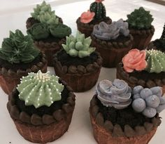 Cactus and succulent cupcakes by Atelier mei's - Modern Cactus Cake, Cactus Cupcakes, Succulent Cupcakes, Star Cakes, Apple Smoothies, Thanksgiving, Savoury Cake, Cake Creations, Cupcake Cookies