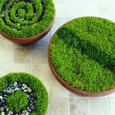 """8 Whimsical and Wonderous Fairy Gardens - Love this dish garden """"crop circles"""". Would make a great foundation and paths for a dish fairy garden. Indoor Plants, Fairy Garden, Plants, Garden Terrarium, Moss Garden, Outdoor Gardens, Garden, Garden Pots, Garden Projects"""