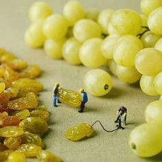 Strengthening grapes