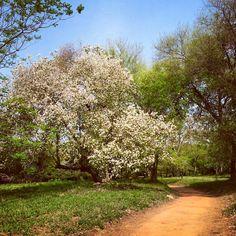 Jardín Botánico .Asunción-Paraguay
