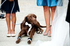 Pets make good wedding participants too!
