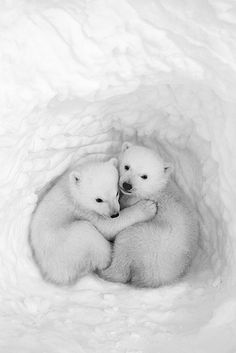 """Jenny E. Ross, """"Twin Cubs in a Snow Den #1"""" ♥"""