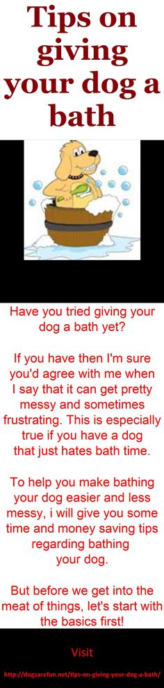 Tips on giving your dog a bath #how to bath my dog