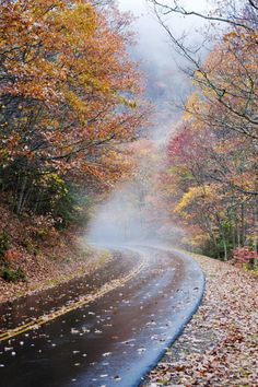 moody-nature:  the road unknown | By Dennis | Buncombe, North Carolina, USA