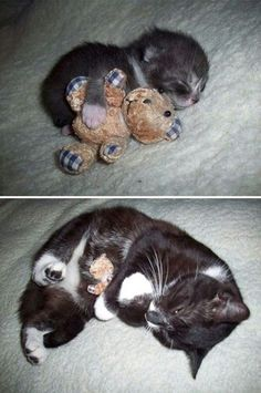 kitty with her teddy