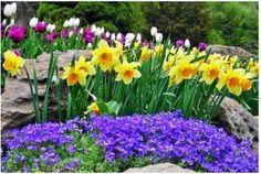 Stunning Spring Variety