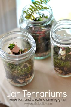 A video tutorial on how to make terrariums! They are so easy and can be as inexpensive as you like! from NellieBellie