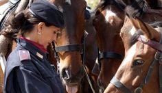 http://www.hdtvone.tv/videos/2015/02/09/adotta-un-cavallo-della-polizia