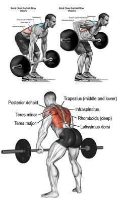 Fitness Workouts, Fitness Gym, Weight Training Workouts, Planet Fitness Workout, Gym Workout Tips, Muscle Fitness, Fitness Tips, Mens Fitness, Bodybuilder