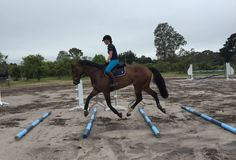 Cavaletti/pole work to improve the horses topline
