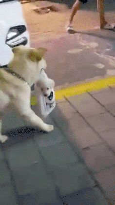 Caring doggo funny pics, funny gifs, funny videos, funny memes, funny jokes. LOL Pics app is for iOS, Android, iPhone, iPod, iPad, Tablet #dogsfunnyvideos