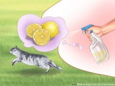 Try citrus - wikihow.com