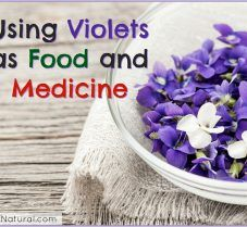 Using Violets for Your Dinner Table and Medicine Cabinet