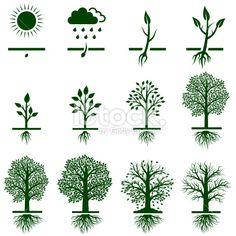 stock-illustration-19638696-tree-growing-growth-life-cycle-icon-set.jpg (380×380)