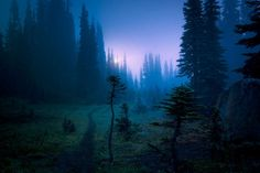 Meadow Twilight ,  Olympic Peninsula ,  by Bill Hinton